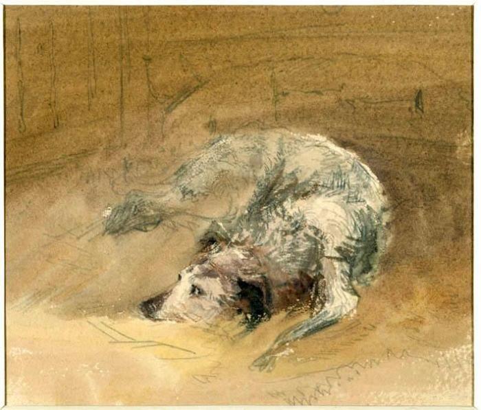 David Cox study of a dog