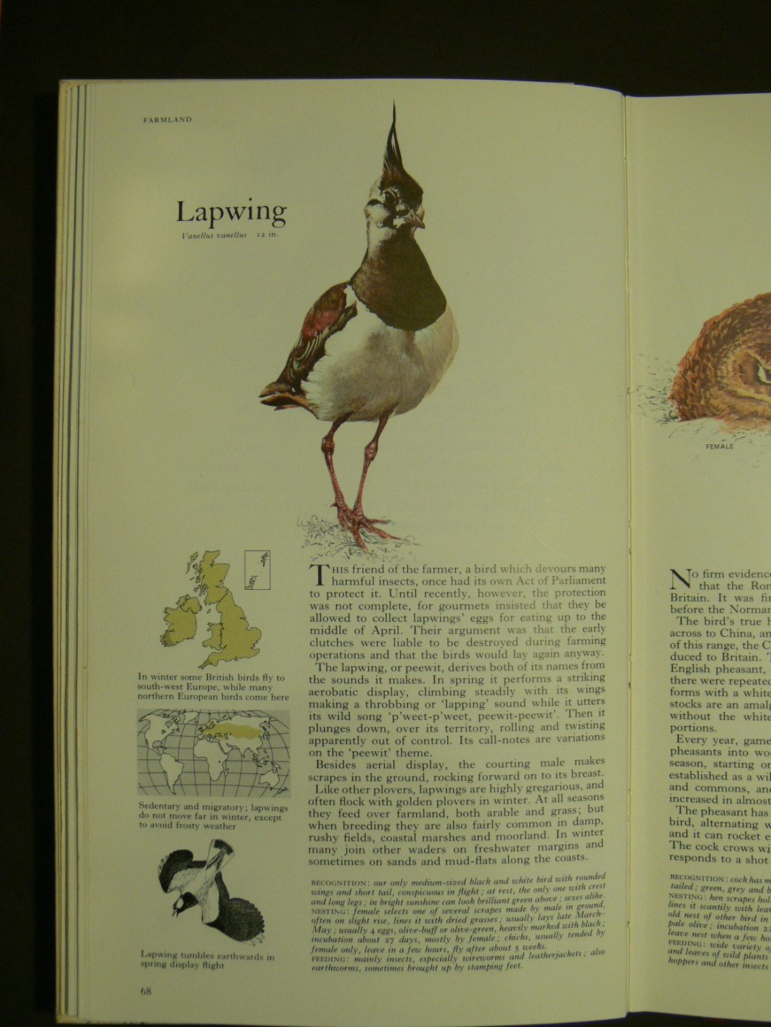 From the Readers Digest Book of Birds, a most valuable and informative book. It 'appeals' ... is a beautiful object, it draws you in like no website ever could.